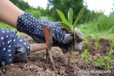 بهره گیری از خاک مناسب برای کاشت