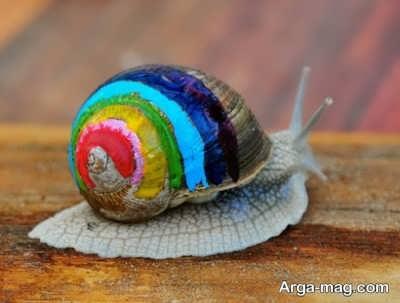 تعبیر دیدن صدف حلزون در عالم رویا