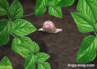 تعبیر دیدن صدف حلزون در عالم خواب