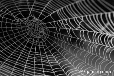 تاویل خواب تار عنکبوت