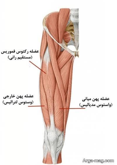 ورزش مناسب تقویت عضلات چهار سر ران