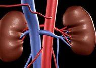 علائم عفونت کلیه و روش های درمان آن