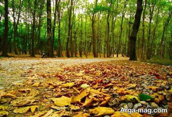 جنگل های آمل