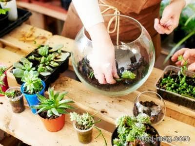 اصول ساخت تراریوم گیاهی