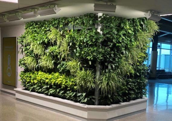 انتخاب گیاهان مناسب دیوار سبز