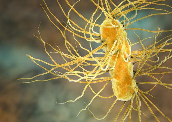 درمان خانگی میکروب معده