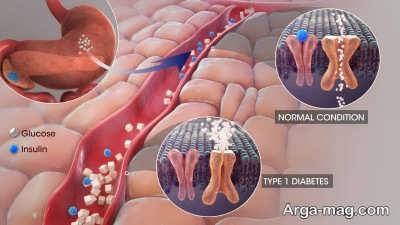 عملکرد انسولین بر اندام ها