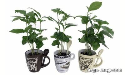 روشهای کاشت قهوه