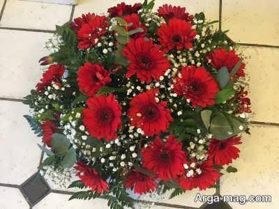 گل ژربرا و آبیاری مناسب