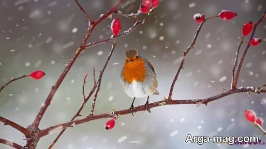 عکس نوشته زیبا برای زمستان