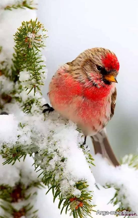 عکس نوشته دیدنی و خاص برای زمستان