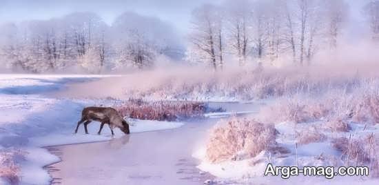 عکس مخصوص برای پروفایل زمستان