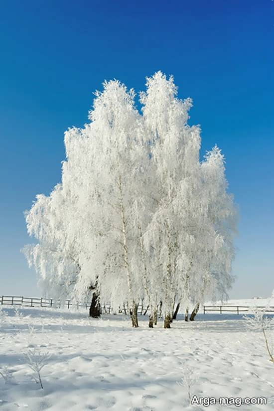 عکس درخت برفی برای پروفایل