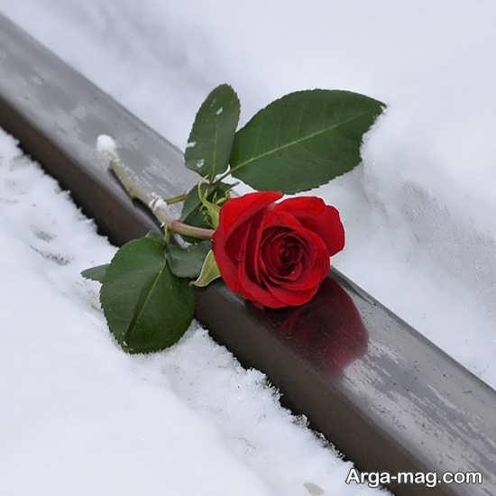 عکس زیبا از گل برفی برای پروفایل