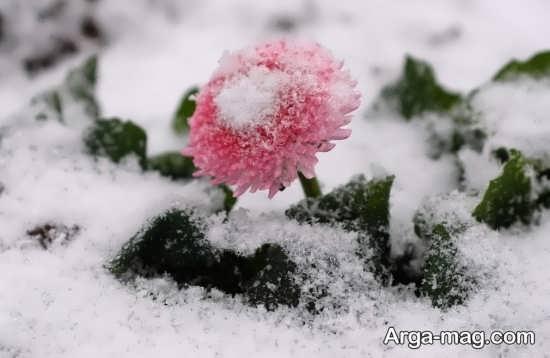 عکس خاص برای زمستان