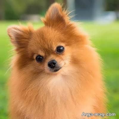انواع نژاد سگ