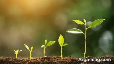 نور کافی برای رشد بهتر گیاه گندمی
