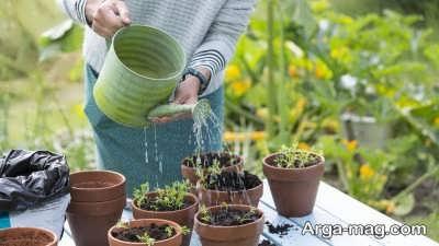 آبیاری منظم گیاه گندمی