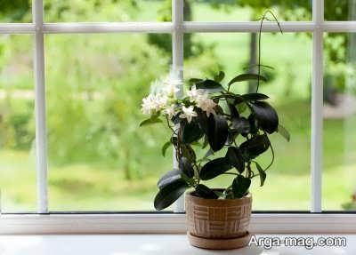 قرار دادن گیاه در برابر نور خورشید برای رشد بهتر