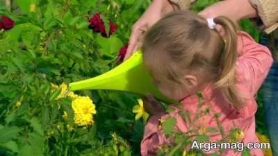 آبیاری منظم گل آهار