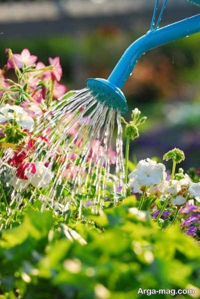 آبیاری منظم گل های اطلسی