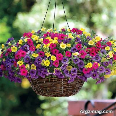 پرورش گل اطلسی در خانه