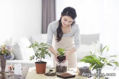 عوض کردن گلدان های گیاه آرالیا