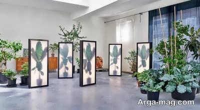 انواع مختلف گیاه آرالیای برگ پهن