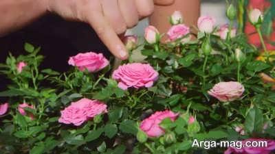 روش های مختلف پرورش گیاه ساناز
