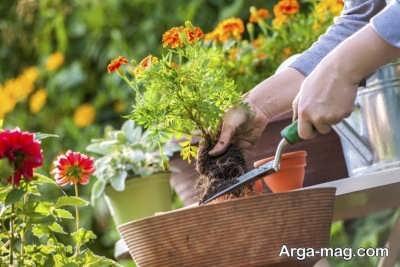 نحوه کاشت گل ساناز در گلدان