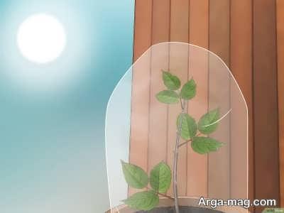 نور لازم برای پرورش گیاه ساناز