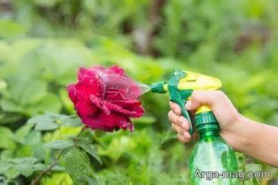 روش از بین بردن شته گیاهان