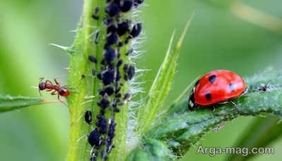 مبازره با آفات گیاهان