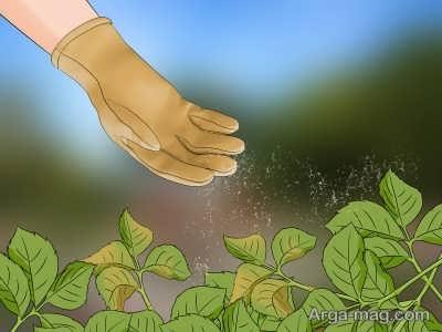 روشهای حذف شته گیاهان