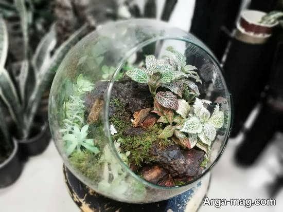 نگهداری و پرورش گل فیتونیا از سه روش قلمه و بذر و تقسیم ریشه