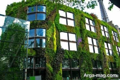 گیاهان مناسب دیوار سبز برای انواع باغچه های دیواری در مکان های مختلف