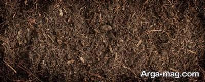 چگونگی تولید خاک برگ توسط برگ های درختان