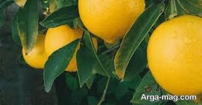 خصوصیات متنوع روغن لیمو