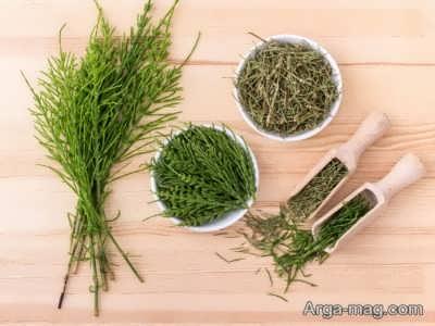 گیاه دم اسب در طب سنتی