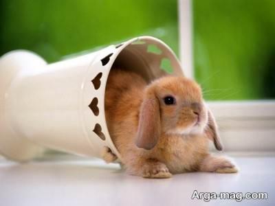 تعبیر مشاهده خرگوش نشانه چیست ؟