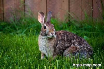 تعبیر دیدن خرگوش در عالم رویا