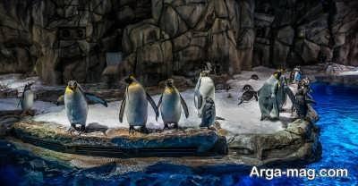 خطرات و رازهای قطب جنوب