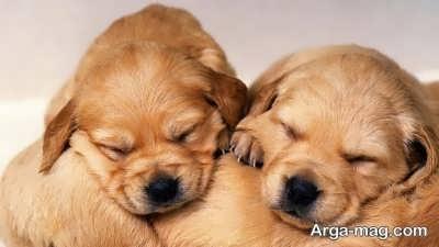 مراحل زایمان سگ چیست؟