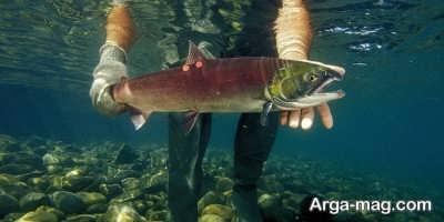 کاهش و از بین رفتن ماهی ها در نتیجه گرم شدن زمین