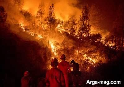 آتش سوزی جنگل نتیجه گرم شدن زمین