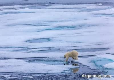 اسرار نهفته در قطب شمال