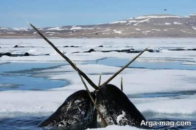 رازهای که قطب شمال وجود دارد