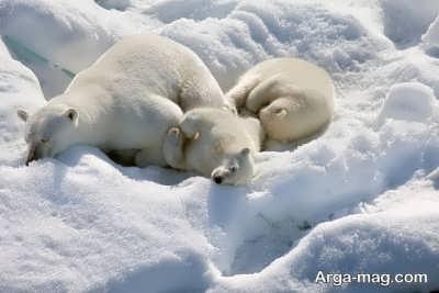 رموز قطب شمال