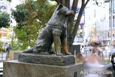 ساخت مجسمه هاچیکو در میدان شهر به عنوان نماد وفاداری