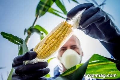 طریقه تشخیص محصولات تراریخته و بررسی فواید و مضرات کشت این محصولات